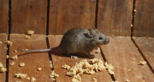 طرق التخلص من الوزغ والفئران وبعض الحشرات