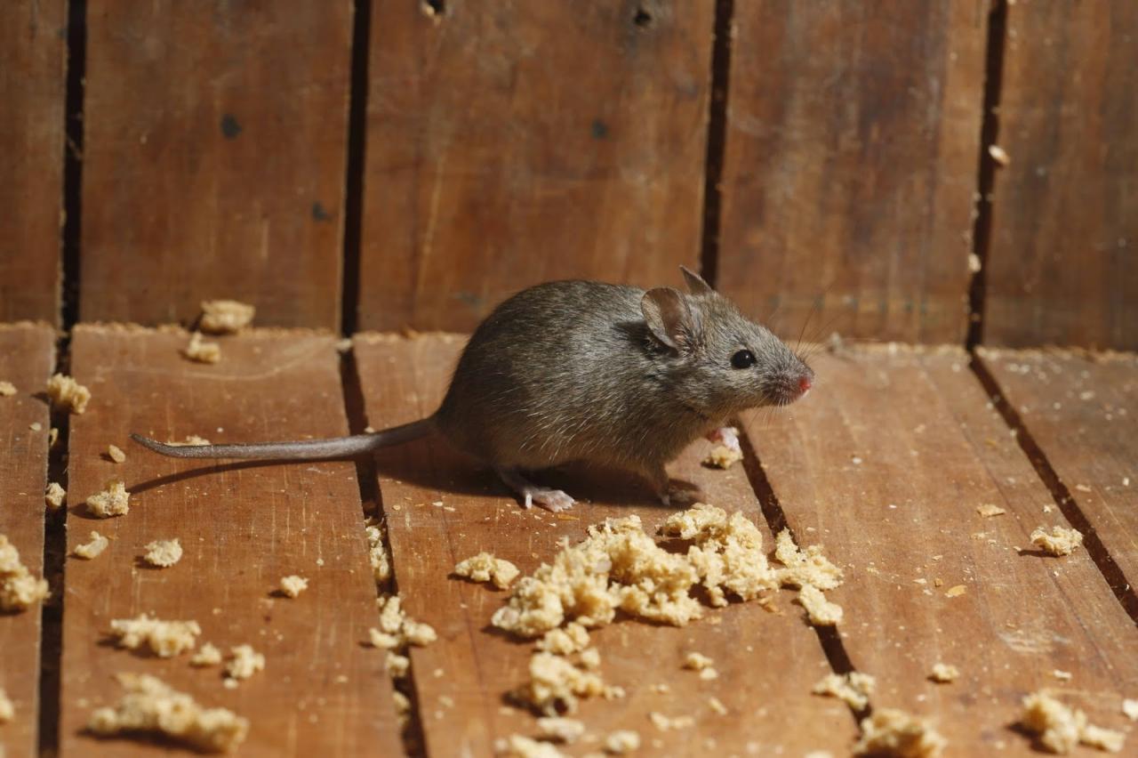 طرق التخلص من الوزغ و الفئران و بعض الحشرات